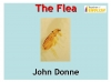 The Flea (Donne) (slide 1/39)